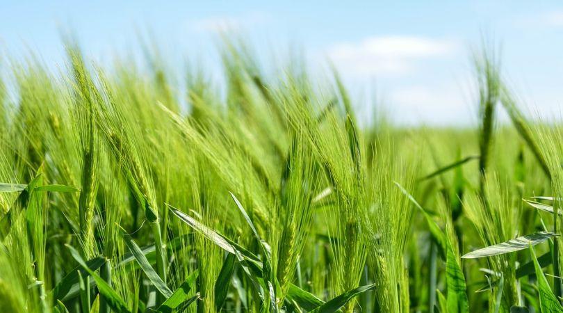 bando-per-lagricoltura-biologica-la-lombardia-stanzia-fondi-per-gli-incentivi