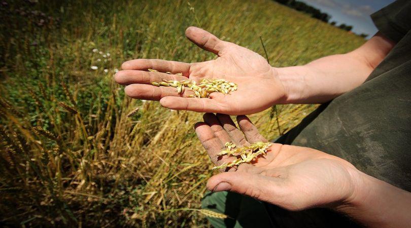 disoccupazione-agricola-ecco-come-ottenerla