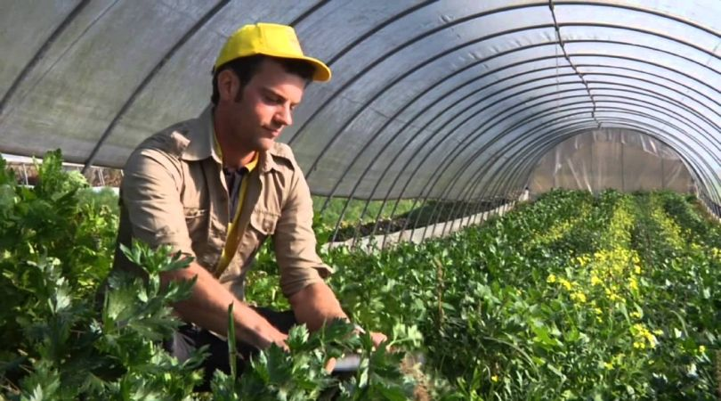 finanziamenti giovani imprenditori agricoli
