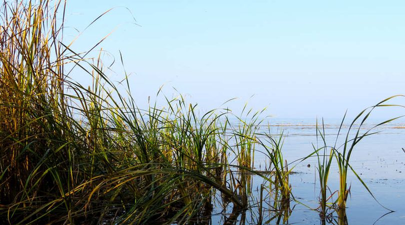 bando acquacoltura regione Lombardia