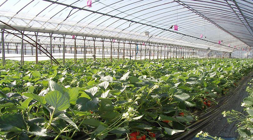 prestito-di-conduzione-imprese-agricole