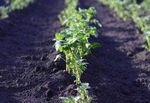 contributi in agricoltura valle d'aosta