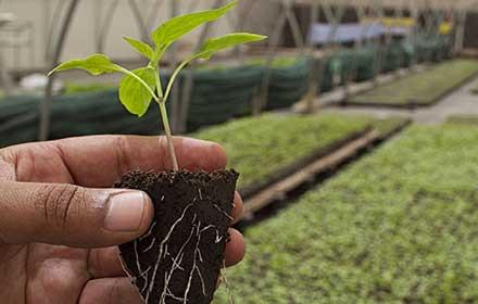 finanziamenti alle imprese agricole del veneto