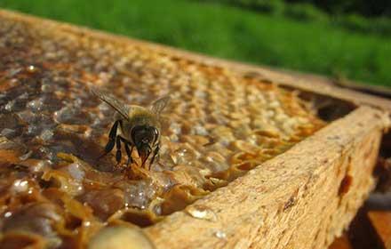 Contributi apicoltura Abruzzo