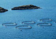 fondi europei per l'acquacoltura