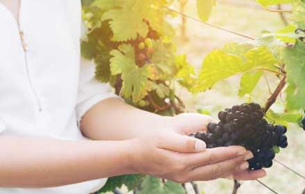 contributi settore vitivinicolo