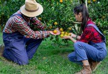 PSR Lazio giovani agricoltori
