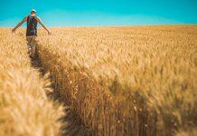 disoccupazione agricola e partita iva
